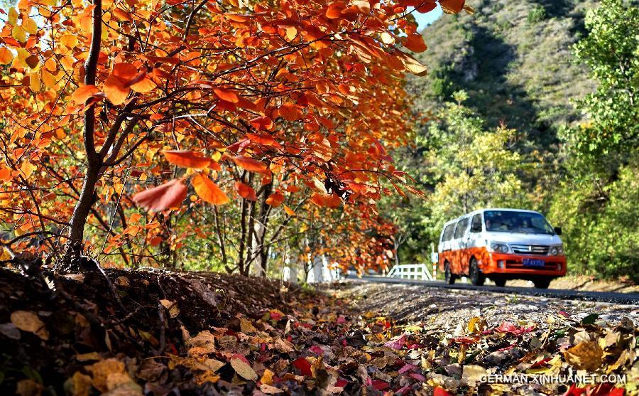 Warum färben sich die Blätter im Herbst - Xinhua | german.xinhuanet.com
