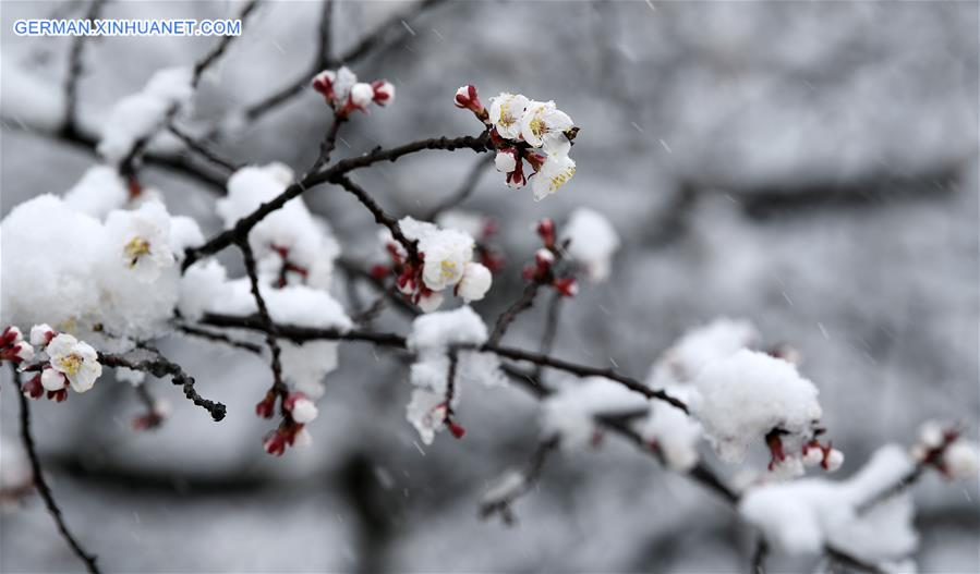 CHINA-NINGXIA-GUYUAN-SNOW SCENERY (CN)