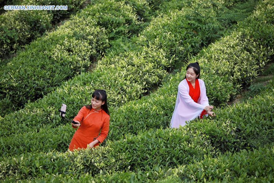 CHINA-GUIZHOU-YUQING-TEA-ONLINE PROMOTION (CN)