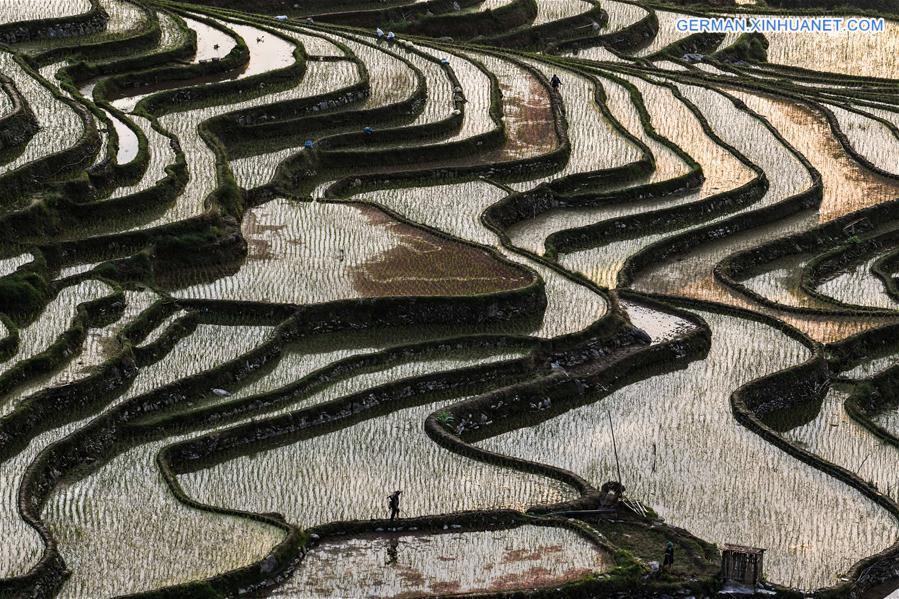 CHINA-GUIZHOU-CONGJIANG COUNTY-TERRACED FIELDS (CN)