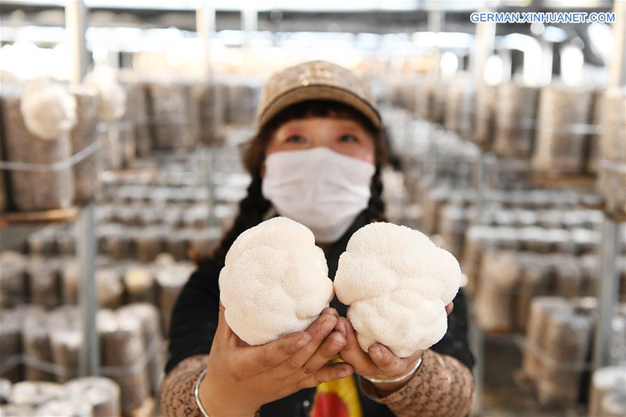 CHINA-HEILONGJIANG-HAILIN-MUSHROOM INDUSTRY (CN)