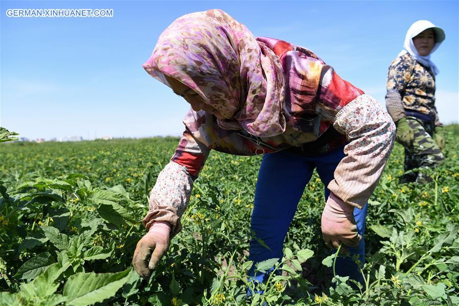 CHINA-XINJIANG-YANQI-AGRICULTURAL PRODUCTS (CN)
