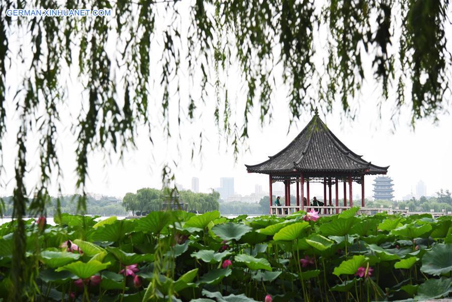 CHINA-SHANDONG-JINAN-LOTUS (CN)