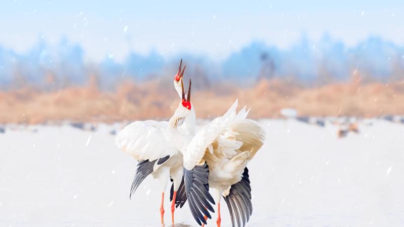 Album von China: Abstimmen mit Flügeln