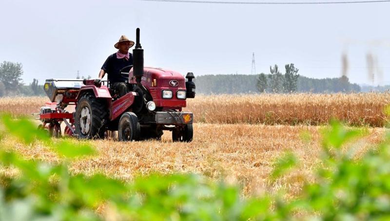 Bauern ernten Weizen in der ostchinesischen Provinz Shandong