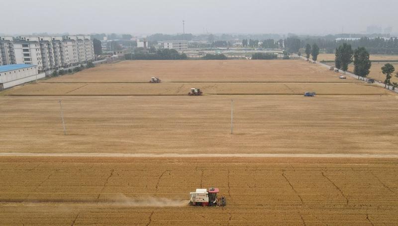 Bauern ernten Weizen in der ostchinesischen Provinz ...