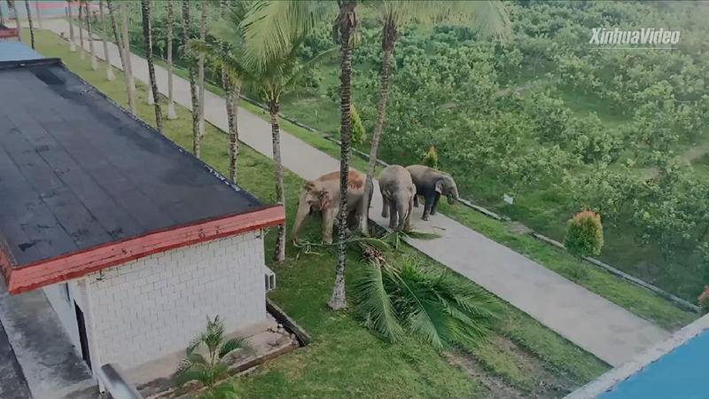 Drei wildlebende Elefanten wagen sich in Polizeistation in Südwestchina