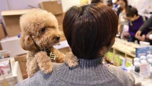 12. Pet Show in Hong Kong abgehalten