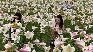 Tolle Lilien in Jiangxi