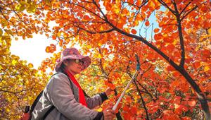 Herbstlandschaft des Taihang-Berges