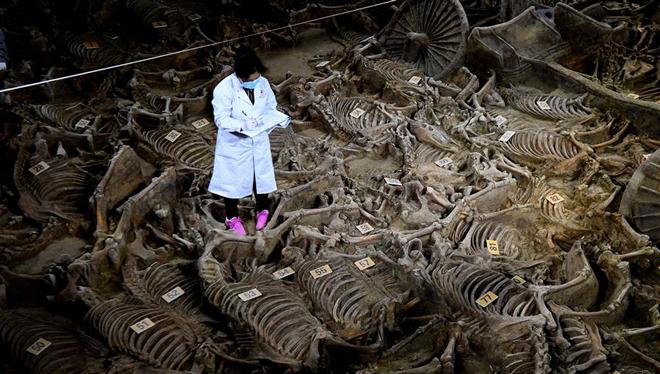 2.400 Jahre alte Pferd- und Wagengrube in China ausgegraben