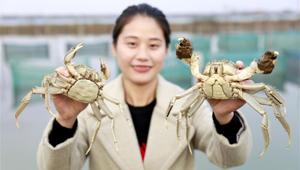 Krabben-Industrie auf dem Hongze-See von Huai'an