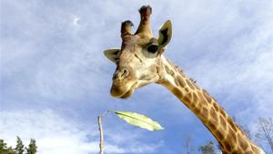 """""""Tierstars"""" im Yunnan Zoo im Südwesten Chinas"""