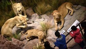 Behring Naturgeschichte-Museum in Qingdao