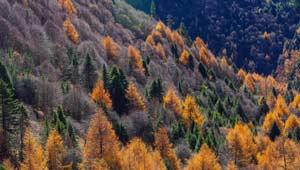 Landschaft des frühen Winters in Nyingchi