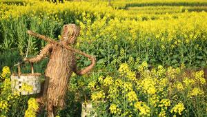 Strahlend gelbe Frühlingslandschaft in Chongqing