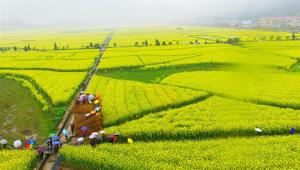 Frühlingslandschaft im Dorf Huashan
