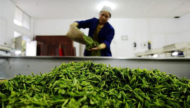 Tee-Industrie in der Provinz Guizhou