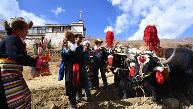 Frühlingspflugzeremonie in Lhasa