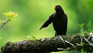 Vögel auf Bäumen