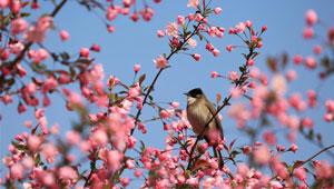 Vögel begrüßen den fröhlichen Frühling