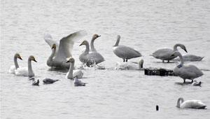 Vögel im Yeya See Feuchtgebietsreserve in Beijing