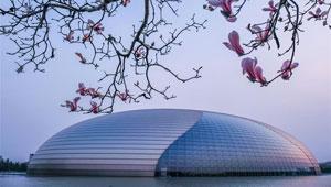 Magnolienblüten vor dem Nationalen Zentrum für darstellende Kunste in Beijing