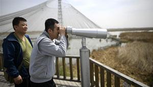 Vogelbeobachtung auf dem Shahu-See in Ningxia abgehalten