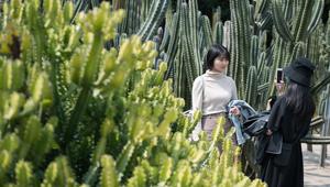 Sukkulenten in Xiamen ziehen viele Besucher an