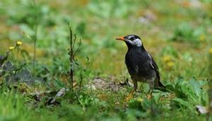 Vögel im Frühling in Shanghai