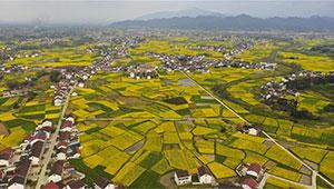 Rapsblumenfelder in der Stadt Hanzhong von Shannxi