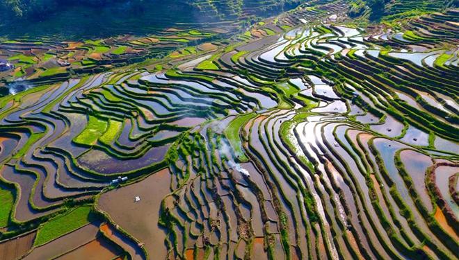 Chinas Agrarsektor verzeichnet in letzten 70 Jahren rasantes Wachstum