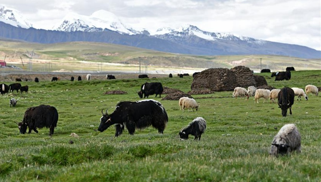 Hochlandweiden im Kreis Damxung im südwestchinesischen Autonomen Gebiet Tibet