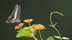 Schmetterling im Wenquan Park von Fujian