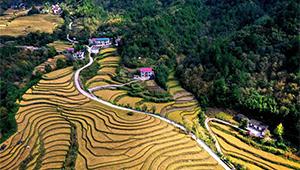 Landschaft der Reisfelder in Ningshan von Shaanxi