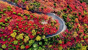 Herbstlandshcaft in Jinan von Shandong
