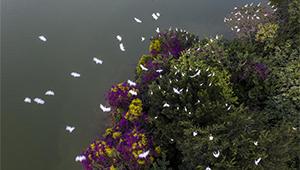 Reiher im ökologischen Garten Bihu von Fujian