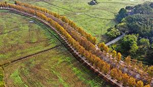 Frühwinterlandschaft in Chongqing von China