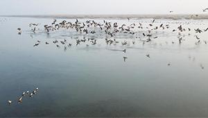 Zugvögel fliegen über Shengjin-See in Chizhou von Anhui
