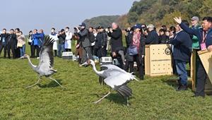 120 geheilte Zugvögel in die Wildnis freigelassen