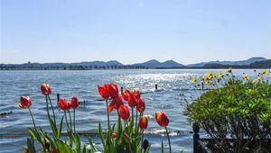Der Frühling kommt: Blumen im Landschaftsgebiet Westsee