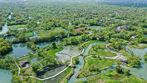Landschaft des Nationalen Feuchtgebietsparks Xixi in Hangzhou