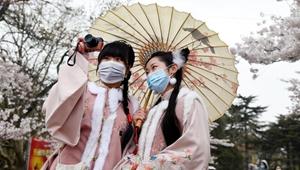 Kirschblüte in Qingdao zieht Besucher an