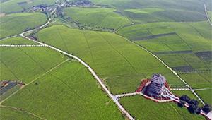 Landschaft der Teegärten in Guizhou