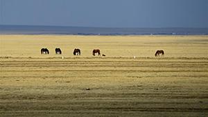 Frühlingslandschaft von Hulun Buir in Chinas Innere Mongolei