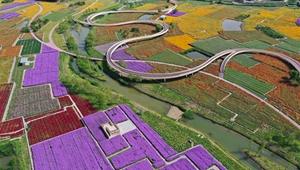 Blumenfelder im Waldpark in Jiangsu