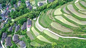 Ansicht der terrassierten Felder in Chinas Hubei