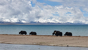 Landschaft am Nam Co See in Tibet