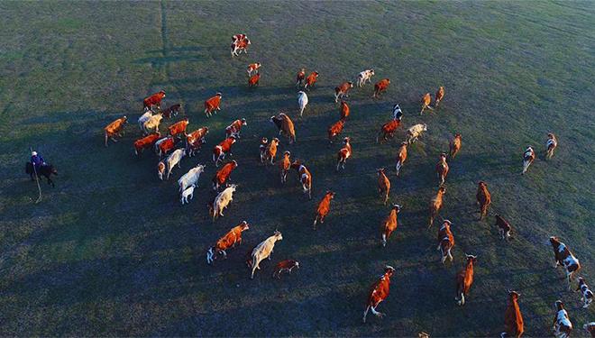 Hirten in Jarud Banner wandern mit Tieren auf Sommer-Campingplätze