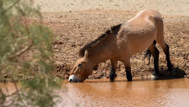 Wildtiere im Naturschutzgebiet Kalamayli in Xinjiang